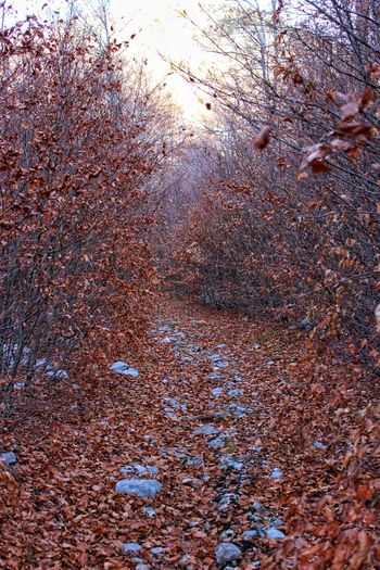 Full Frame Textured  Outdoors Woods Outdoor Photography Hikingadventures Hiking Pattern Day Trees And Nature Autmncolors Autmn Landscape Autmumn Leaves Leaves On The Ground Leaves Color Full Of Leaves Pathswewalk Hiking Trail
