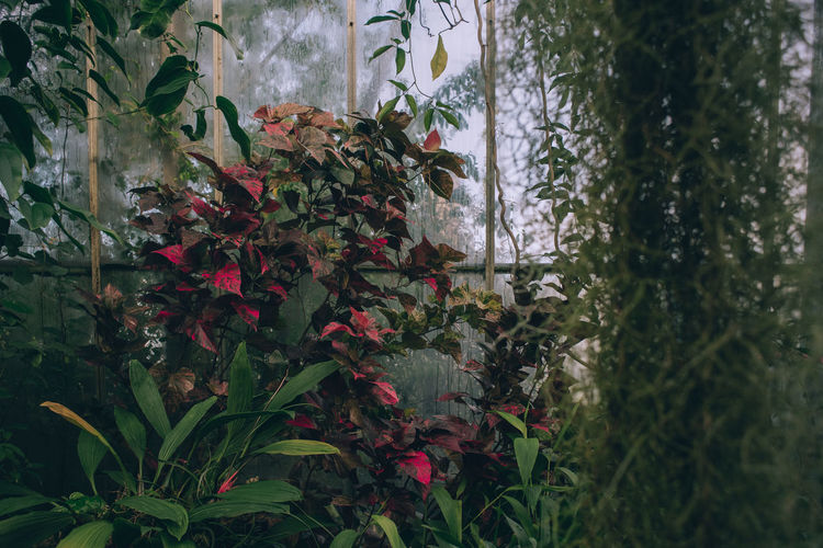Close-up of flowering plants by window