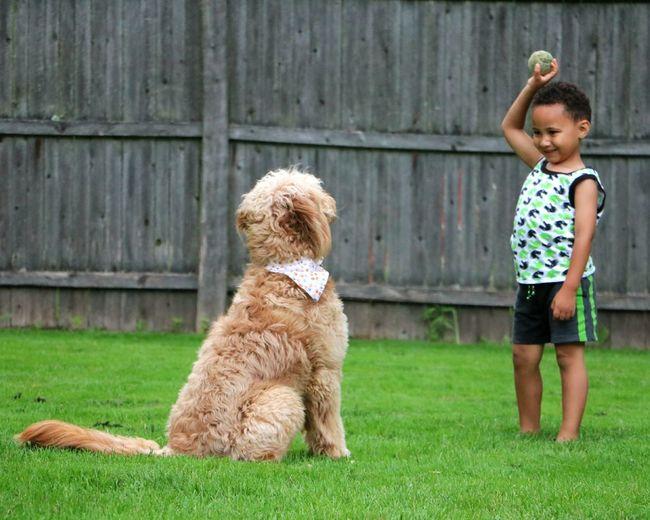 Cute boy playing with dog