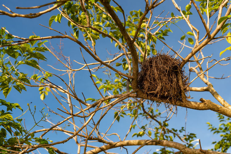 Low angle view of bird nest on tree against sky
