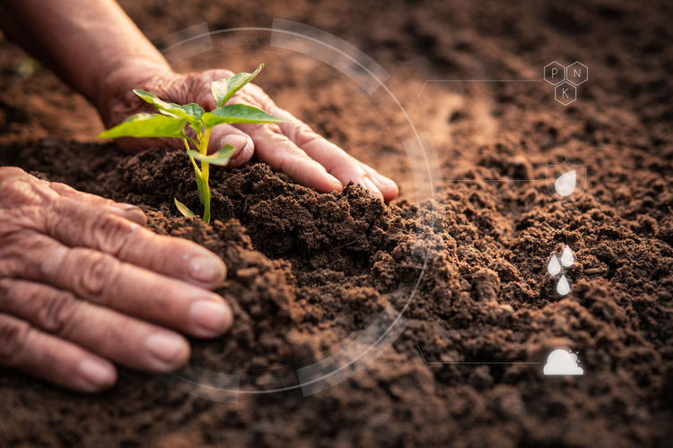 Human Hand Growth Plant Gardening Nature Leaf Planting Outdoors Care Humanity Meets Technology