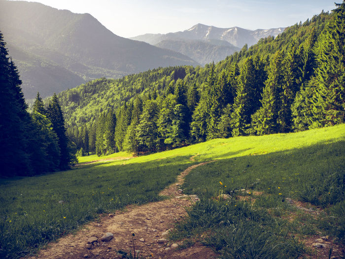 way up to hirschberg in the bavarian alps in the background with the peack of Wallberg mountain. Scharling, Bavaria, Germany, June 2019 Germany Hirschberg Tergernsee Way To Hirschberg Wandern Wandern In Den Alpen Weg Pfad Plant Mountain Beauty In Nature Landscape Environment Scenics - Nature Tree Green Color Land Tranquility Nature No People Tranquil Scene Grass Growth Sky Outdoors Non-urban Scene Mountain Range Tegernseer Berge Forest Day