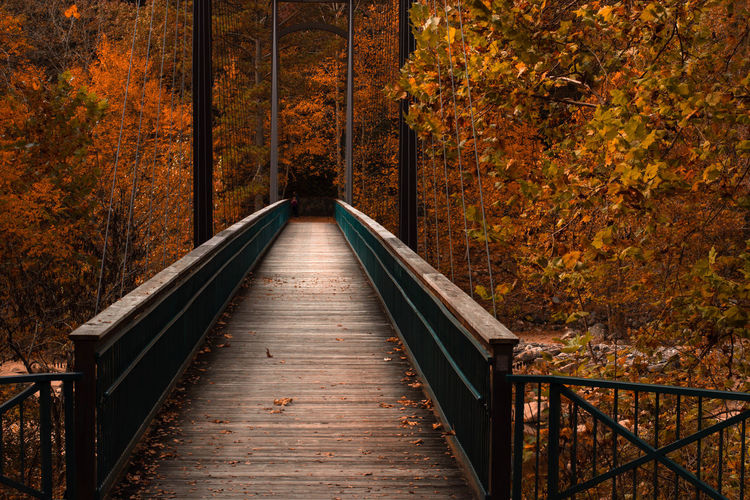 Footbridge amidst trees in forest during autumn
