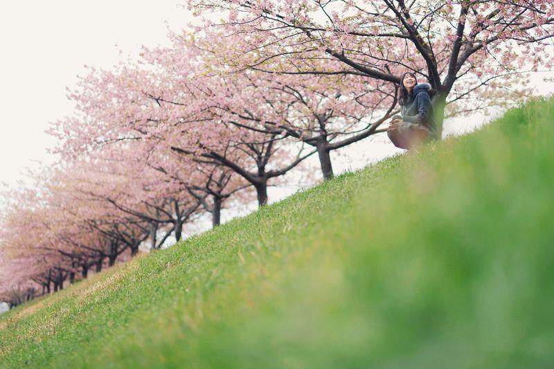Cherry blossom tree in park