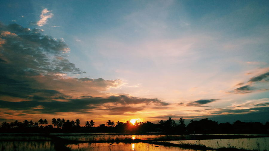 Ricefield Landscape Landscape_Collection Sunset Sunset_collection Relaxing The Places I've Been Today Rice Field Things I Like This Is Indonesia This Is Where I Live...