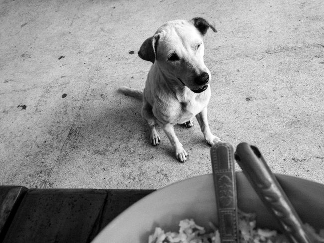 """ Waiting with hope"" Hope Blackandwhite Black & White Monochrome Animals Dog Stray Dog"