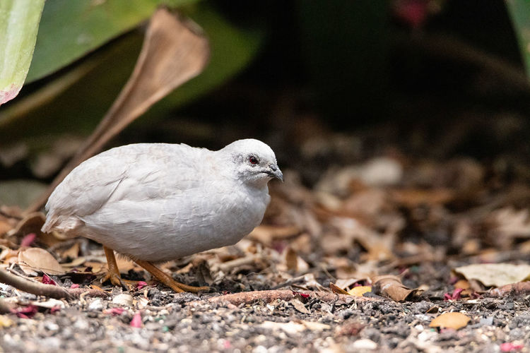 Close-up of pigeon perching on a land