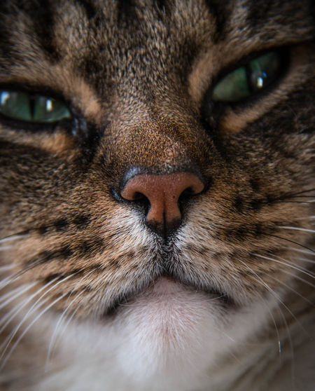 Full Frame Portrait Of Cat