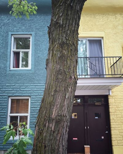 Colour Photography Coloursareeverywhere Architecturelovers Architectural Detail Architecture_collection Montrealarchitecture Tourism Montréal Montreal, Canada Streetphotography Montréaljetaime Montrealdoors Great Atmosphere Montreal Street Placetovisit Streetphoto_color Montreal Series Montrealhouses Colours. Montrealwindows Windows