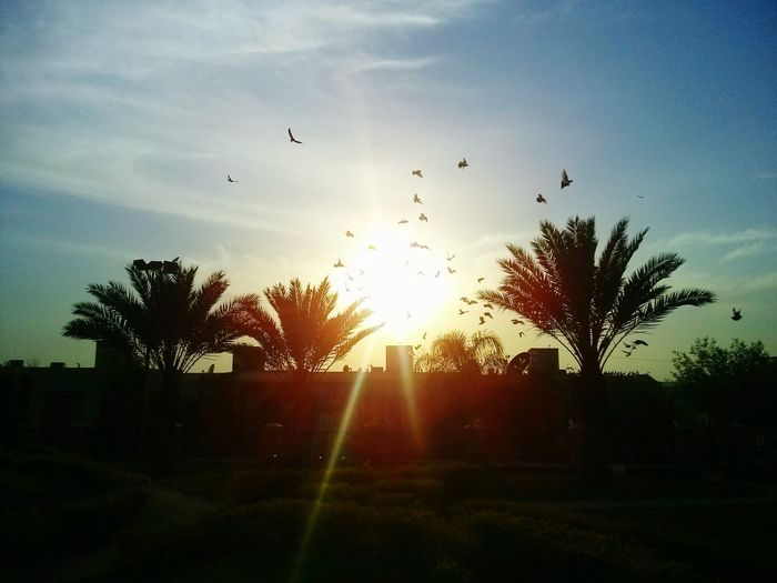 Small And Swift Enjoying Life EyeEm Best Edits EyeEm Masterclass Fly Away Fly High Sunset #sun #clouds #skylovers #skyporn #sky #beautiful #sunset #clouds And Sky #beach #sun _collection #sunst And Clouds Sunset Silhouettes Pigeons