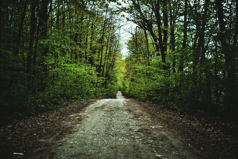 Road through forest The Way Forward Growth Nature Green Color Outdoors Beauty In Nature Tree No People Tranquility Day Forest Scenics Sky Growth Freshness First Eyeem Photo Wheat Cloud - Sky Rural Scene Tranquility Tranquil Scene Cereal Plant Tree Beauty In Nature Backgrounds