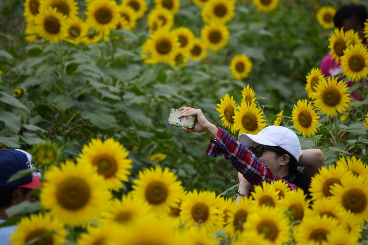 real people, flower, yellow, lifestyles, leisure activity, one person, day, outdoors, beauty in nature, sunflower, nature, plant, young women, growth, childhood, freshness, photographing, selfie, young adult, flower head