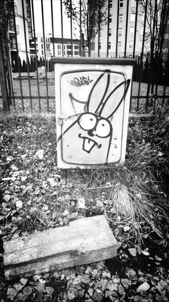 Bunny  Art Graffiti Streetart Streetart/graffiti