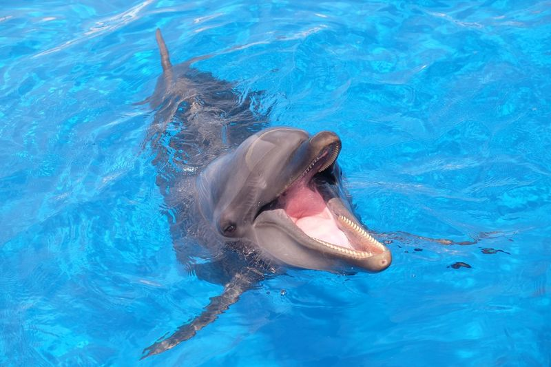 dolphin at Okinawa Animal Themes Animal Water Animal Wildlife Animals In The Wild Sea Underwater Animal Body Part No People Swimming Dolphin One Animal Animal Mouth Mouth