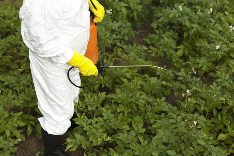 Midsection of person spraying plant