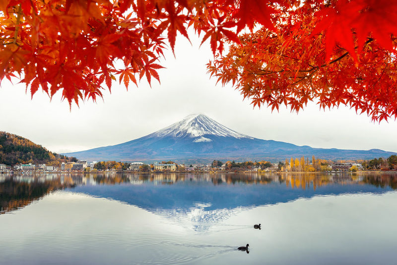 Autumn Season and Fuji mountain at Kawaguchiko lake, Japan. Autumn Beauty In Nature Change Day Lake Mountain Nature No People Outdoors Plant Reflection Scenics - Nature Sky Snowcapped Mountain Tranquil Scene Tranquility Tree Water Waterfront