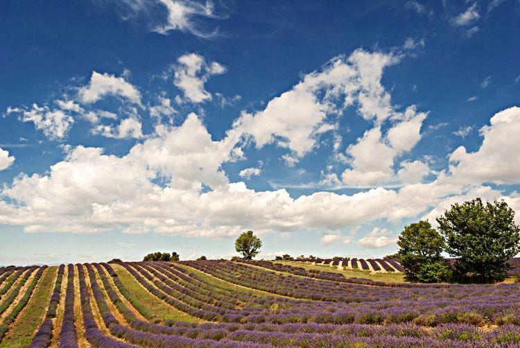 Enjoying Life Landscape No Filter Provence