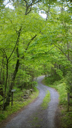 Long And Winding Road Abby Road Forest Photography Nature WoodLand Lush Foliage Beauty In Nature country road