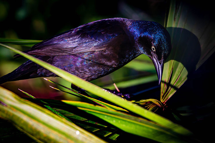 Plant Flower Close-up Flowering Plant Growth Freshness Beauty In Nature Nature Vulnerability  Fragility No People Focus On Foreground Purple Leaf Plant Part Day Petal Green Color Inflorescence Selective Focus Flower Head Bird Grackle
