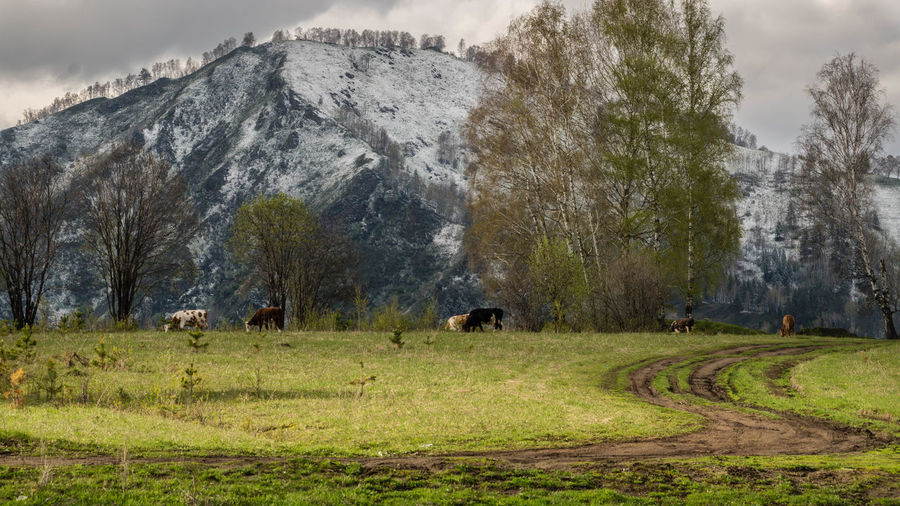 View of sheep grazing on landscape