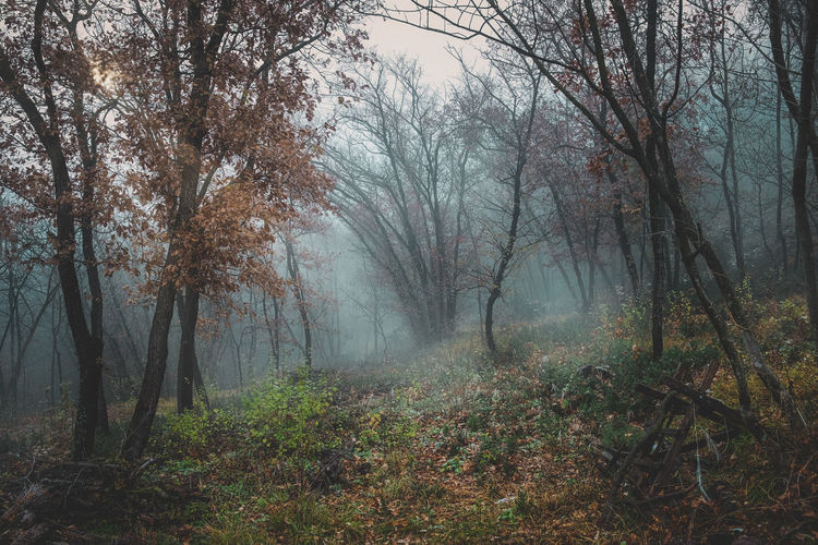 Monti Lessini Adventure Autumn Beauty In Nature Branch Day Fog Forest Grass Landscape Leaf Nature No People Outdoors Scenics Tranquil Scene Tree