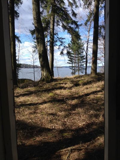 Tree Window Day No People Sky Sunlight Nature Tree Trunk Growth Indoors  Toilette View Turku In Finland Landscape