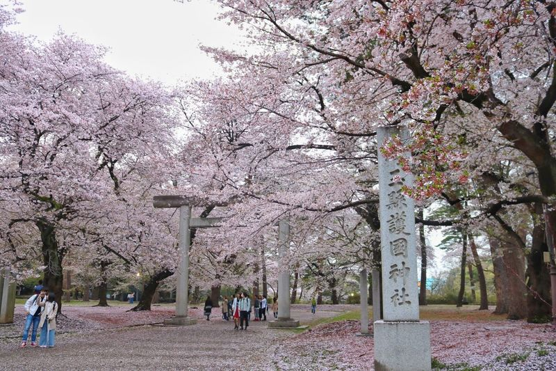 大宮公園🌸 Tree Cherry Blossom Cherry Tree Blossom Flower Springtime Branch Nature Almond Tree Beauty In Nature Growth Pink Color Botany Fragility Apple Blossom Real People Outdoors Men Freshness Day TORII A Shrine Canon Snapseed Japan
