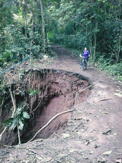 mtb. cocoa plantation