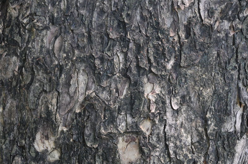 Backgrounds Bark Close-up Day Full Frame Nature No People Outdoors Pattern Rough Textured  Tree Tree Trunk Wood - Material