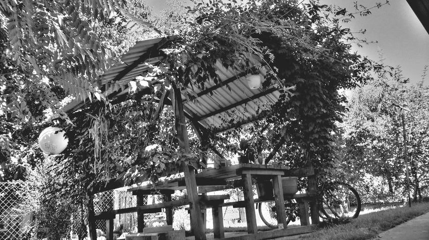 Absence Beauty In Nature Black & White Black And White Blackandwhite Bnw Day Empty Encsencs Green Growth HDR Hungary Nature No People Outdoors Park Bench Plant Seat Sky Sunlight Sunny Tranquil Scene Tranquility Tree