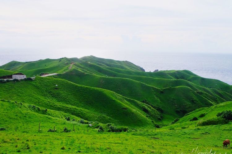 Scenic view of green landscape and sea against sky