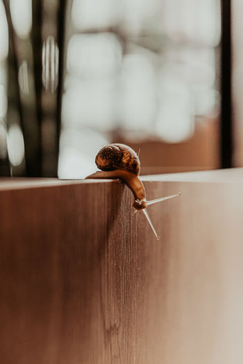 Close-up of snail on wooden table