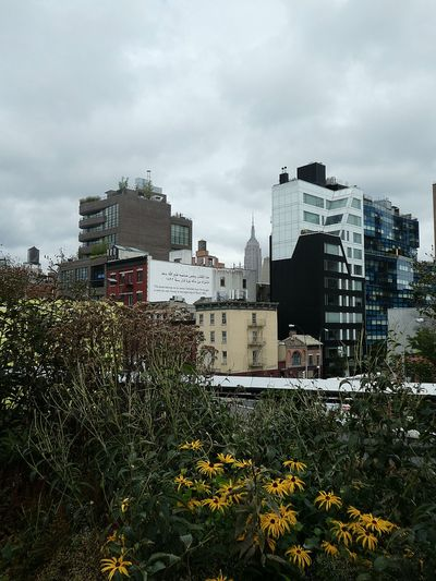 View from the High Line, New York City. Architecture Built Structure Building Exterior Sky Tree Cloud - Sky Outdoors Fresh On Eyeem  Eyem Market Urban Skyline EyeEm Best Shots View From Above Industrial Heritage New York City The High Line Rudbeckia View From The High Line Old Meets New