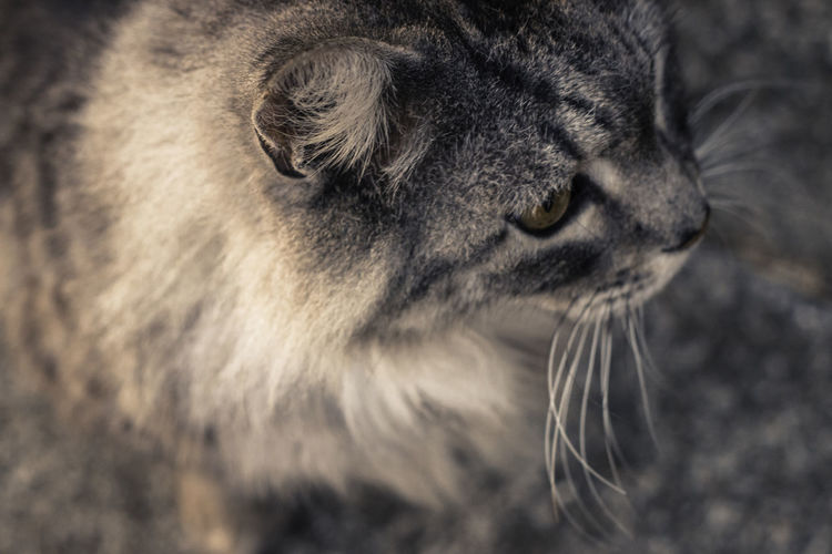 Pet Portraits Animal Head  Animal Themes Animals In The Wild Close-up Day Domestic Animals Domestic Cat Feline Mammal Nature No People One Animal Outdoors Pets Whisker