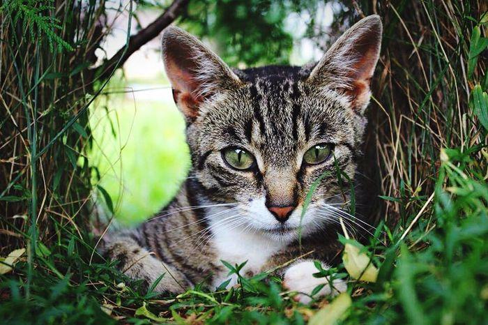 Cat♡ Photoshoot ♡ Catlover Cutecat Hello World Czech Relaxing Catcollection
