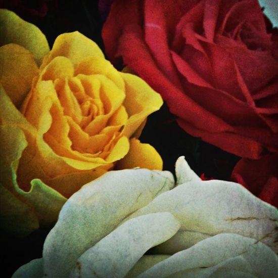 Flowerpower Home Sweet Home Vintage Roses