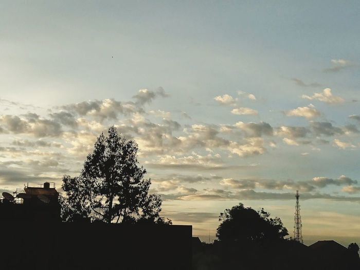 cloud Tree Bird