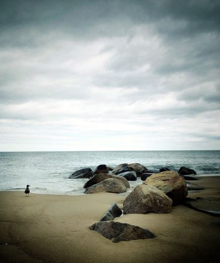 Beach AMPt - Escape The KIOMI Collection Ocean Seagull Water Peaceful Rocky Cloudy Cloudy Sky Ocean Skyline Gray Sky Landscape Seascape Sea And Sky