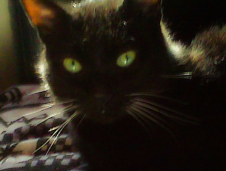 Black Cat Green Eyes Mystical White Whiskers Place Of Heart