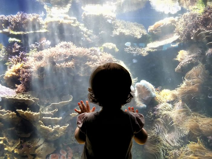 Rear view of girl looking at corals in fish tank at waikiki aquarium