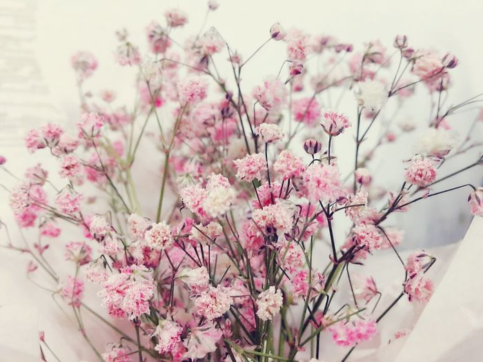 Flowers Dry Flower  Pink Pink Flower Gypsophila Pinkgypsophila First Eyeem Photo