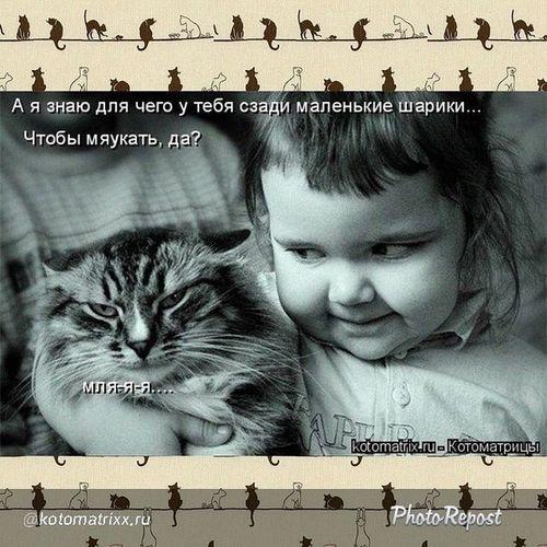 Kotomatrix Котоматрица Photorepost