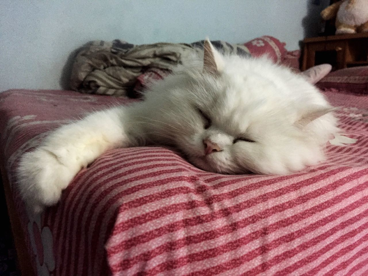 domestic cat, pets, animal themes, domestic animals, indoors, lying down, sleeping, one animal, mammal, feline, relaxation, eyes closed, bed, cute, no people, close-up, persian cat, day