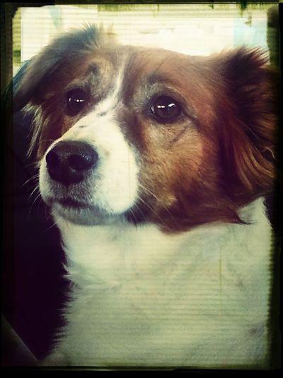 mi amore I Love My Dog