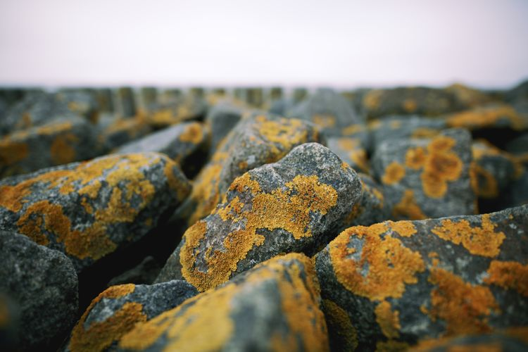 Texture Cuxhaven Stones Background Solid Rock Close-up No People Textured  Rock - Object Selective Focus Nature Focus On Foreground Sky Day Rough Outdoors Land Stone - Object Beach Backgrounds Large Group Of Objects Tranquility