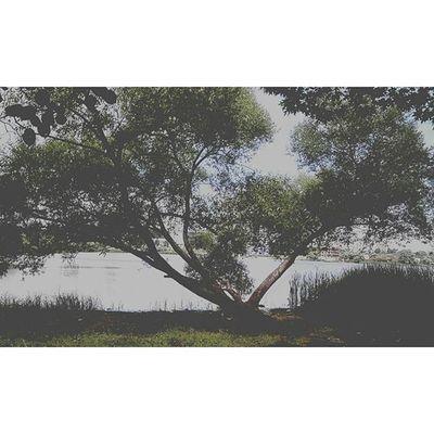 Ещё одно фото с сегодняшней прогулки) необычное деревце) Natural Kiev Tree Photo Green Beautiful Kievgram Kievpics