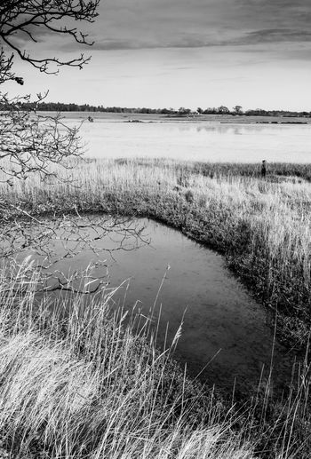 Wintertime at the River Blythe, Suffolk Water River Riverside River View Riverscape Tranquility Tranquil Scene Beauty In Nature Grass Nature Scenics - Nature Landscape Black And White Black And White Photography Black And White Landscape Reeds Marshland  Winter Winter Trees Wintertime