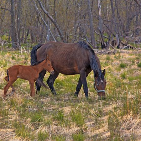 Animals In The Wild Animal Wildlife Nature Animal Themes Mammal Horses Grass No People Outdoors Day Foal Horse Finding New Frontiers Pet Portraits