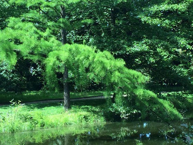Tree Japanese
