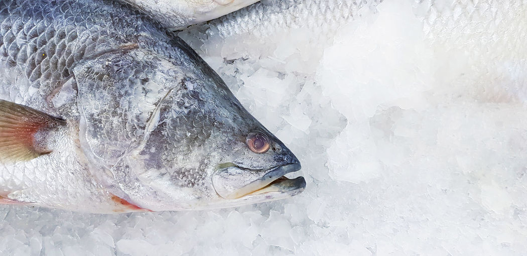 High angle view of fish in snow